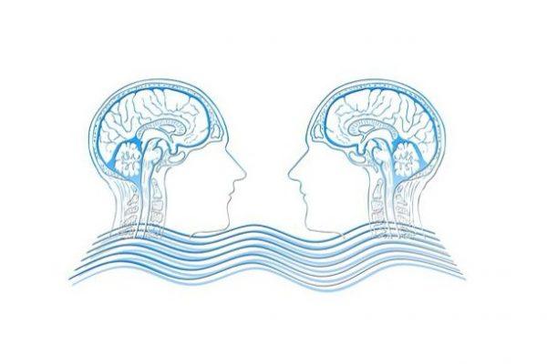 Taller: El Cerebro. El gran desconocido