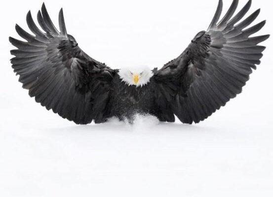 La polaridad de la libertad